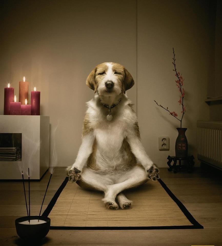 Существует только один путь к спокойствию - прекратить переживать о тех вещах, которые нельзя изменить!
